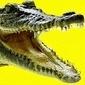 CSC (филиал в Украине) - последнее сообщение от  Alligator